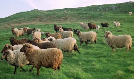 Yin Wood Sheep